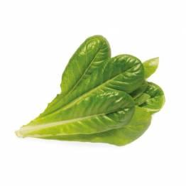 Klicka och odla Smart Garden refill 3-pack-Romaine sallad