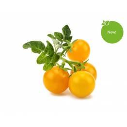 Klicka och odla Smart Garden refill 3-pack-gul mini tomat