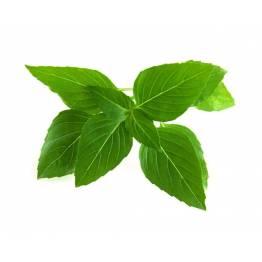 Klicka och odla Smart Garden refill 3-pack-Thai Basil